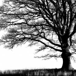 fototapety-natura-13