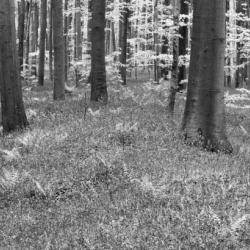 fototapety-natura-14