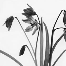 fototapety-natura-19